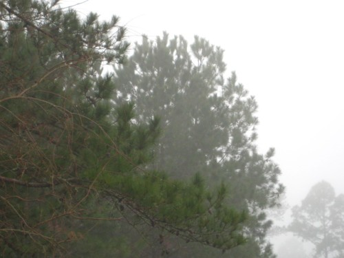 Yep. Foggy trees. Thrilling, huh?